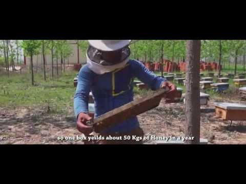 Honey Bee Farm - how to start a honey bee farm (in Hindi with English Subtitles)