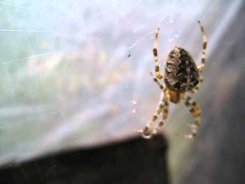Фото паук крестовик - Фото мир природы