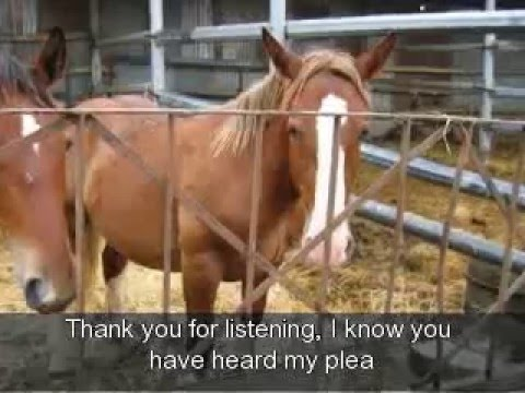 Horse live export for slaughter