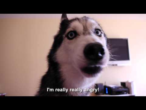 Mishka is Really Really Angry - SUBTITLED