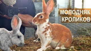 Молодняк кроликов породы Рекс. КФХ Жуковой Т.А.