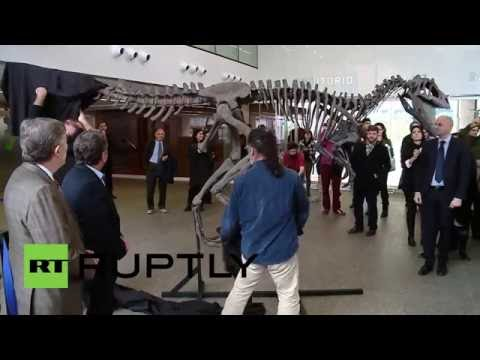 Argentina: New species of dinosaur from Patagonia unveiled in Buenos Aires