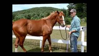How To Teach A Horse To Side Pass