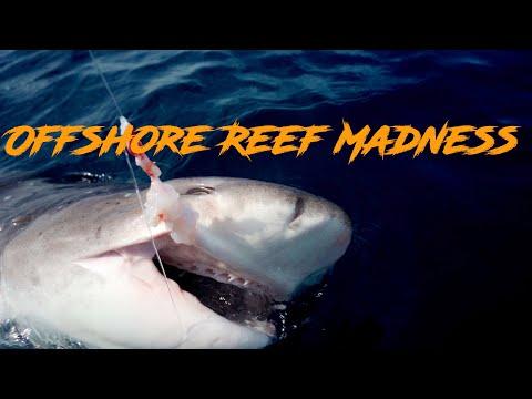Offshore Gummy Sharks - Bass Strait- Victoria- Australia