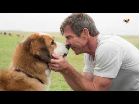 Lasse Hallström-film anklagas för djurplågeri