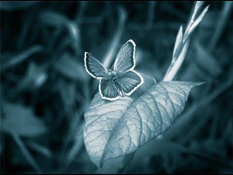 Hand tie shop/ магазин ручной бабочки/ представляет вам наши бабочки на шею аксессуар, который непринужденно подчеркивает ваш индивидуальный стиль.
