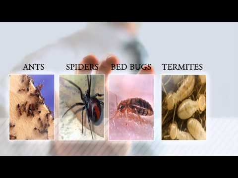 Ant Removal Portland | Pest & Ant Control Vancouver | Pest Control Company Beaverton Oregon |