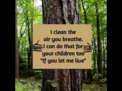 Protect Forest|Plant Trees| General Environment