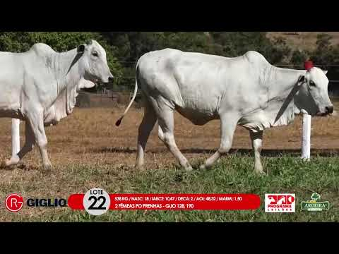 LOTE 22