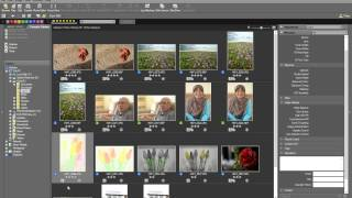 Tutorial on Nikon D750 RAW Editing and Post-Processing using ViewNX 2 and Capture NX-D