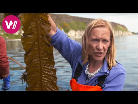 Northern Ireland - Tasty Dishes With Kelp | What's Cookin'