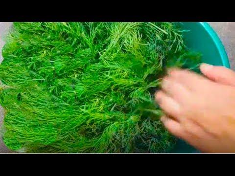 Зелень как свежая на зиму # Как сохранить. Мой проверенный способ! # Зелень на зиму рецепты