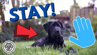 """The Amazing """"Stay"""" - Hand Signals for Dog Training"""