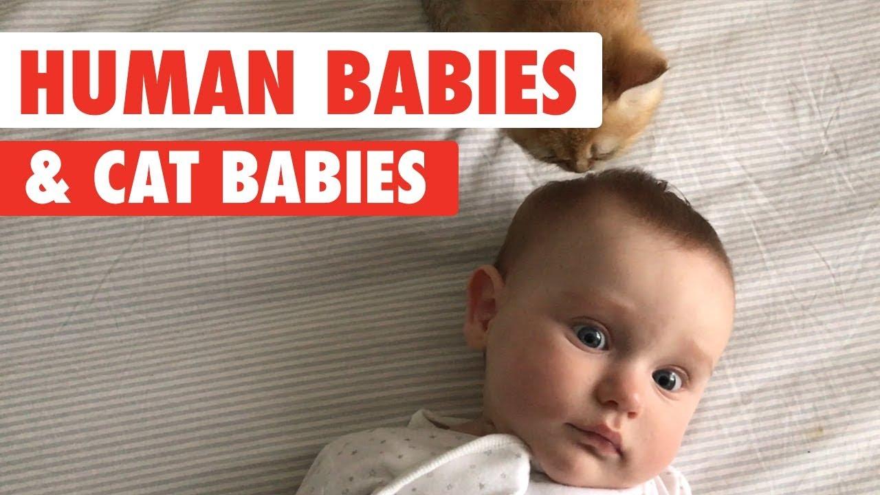 Human babies and cat babies