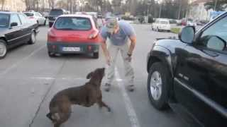 Dog Welcomes Home Soldier!+ Dog Training For Dummies,best Dog Training Book,teach Your Dog To Sit