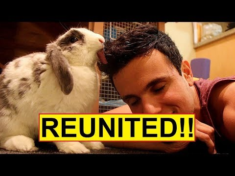 Rabbit hasn't seen his owner for a long time