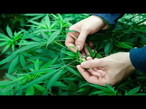 Can Marijuana Turn Around This Colorado Town?