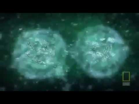 22 окт 2015. Сибирская лиственница таит внутри себя уникальное вещество дигидрокверцетин, способный укреплять сосуды, повышать иммунитет, замедлять. Однако серьёзные испытания не повлияли на стоимость конечной упаковки цена препарата, рассчитанного на курс в 30 дней, вполне.