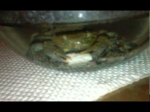 hqdefault - crabes