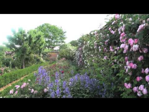 世界上最美丽的玫瑰花园 - 花园第1号 - Mottisfont玫瑰花园