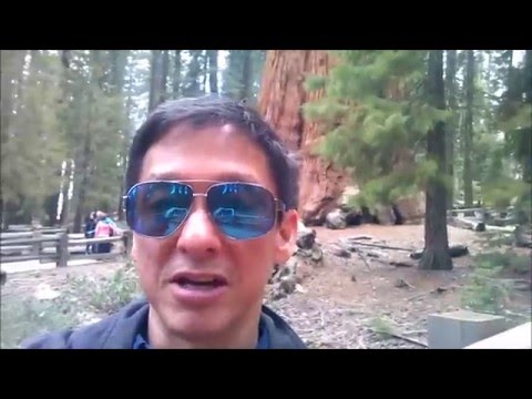 Sequoia National Park-General Sherman, Moro Rock, and Tunnel Log!