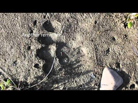 Kluane Park: Donjek Hiking Route (Part 3 - The Conclusion)