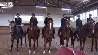 Polizeipferde - Training und Gewöhnungsarbeit www.pferde-magazin.info