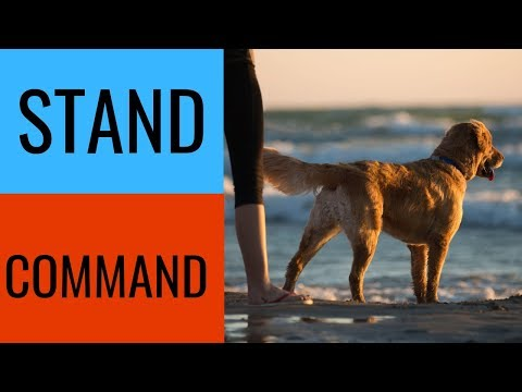 Stand Command For Dogs-Basic Obedience Training Command