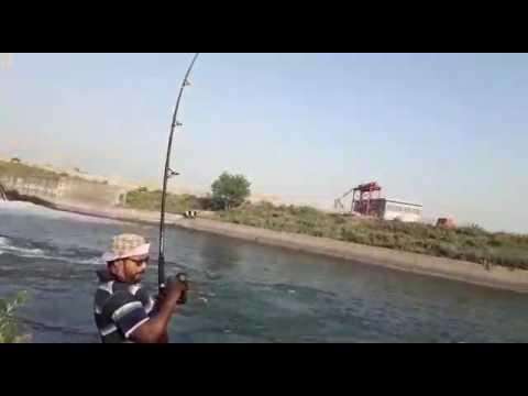 Mahasher 6 kg river beas canal near qadia india