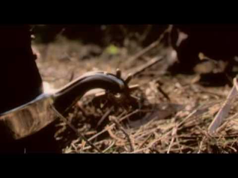 El Pistolero Del Diablo Part 1