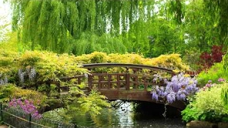30 minutes of relaxing music in the hidden garden study zen yoga spa meditation sleep relax calm