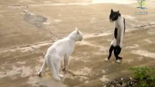 Самые смешные кошки Забавные кошки Видео про кошек