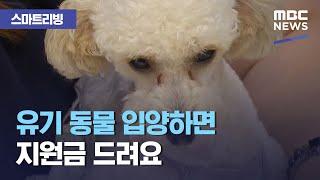[스마트 리빙] 유기 동물 입양하면 지원금 드려요 (2020.11.20/뉴스투데이/MBC)