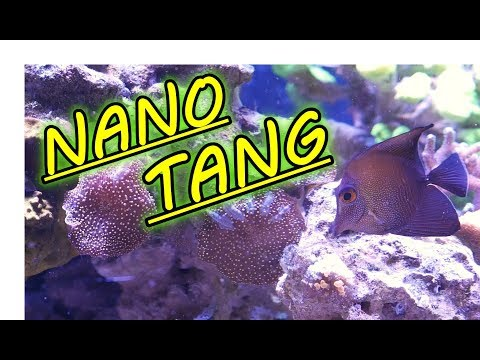 Can You Keep A Tang In A Nano Tank?