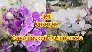 видео: Орхидеи Новый завоз  Фаленопсисов в JMP 8 Марта на носу