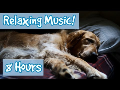 Relaxing Music for Anxious Dogs! Soothe your Dog and Calm Their Nerves with this Tranquil Music! 🐶