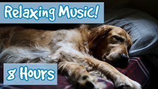 Relaxing Music for Anxious Dogs! Soothe your Dog and Calm Their Nerves with this Tranquil Music! 🐶 thumbnail