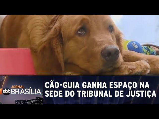 Cão-guia ganha espaço na sede do Tribunal de Justiça | Jornal SBT Brasília 19/02/2019