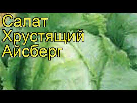 Салат хрустящий Айсберг (Aysberg). Краткий обзор, описание характеристик, где купить семена