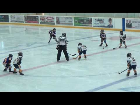 Minor Novice Gold: Applewood at Port Credit