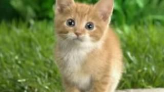 """Песня """"Ты мой миленький хорошенький мой котик"""" с картинками котов."""