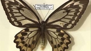 Сюжет про бабочки из коллекции Евгения Денисова 01 04