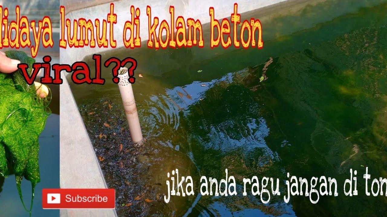 Cara Budidaya Ikan Bandeng Di Kolam Beton - InfoAkuakultur.com