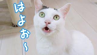 お腹が空いてたくさんお喋りしてくる猫