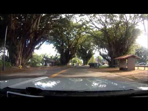 Banyan Drive, Hilo - Hawaii