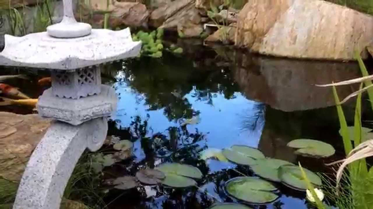 My japanese garden koi pond summer 2014 youtube for Koi pond japan