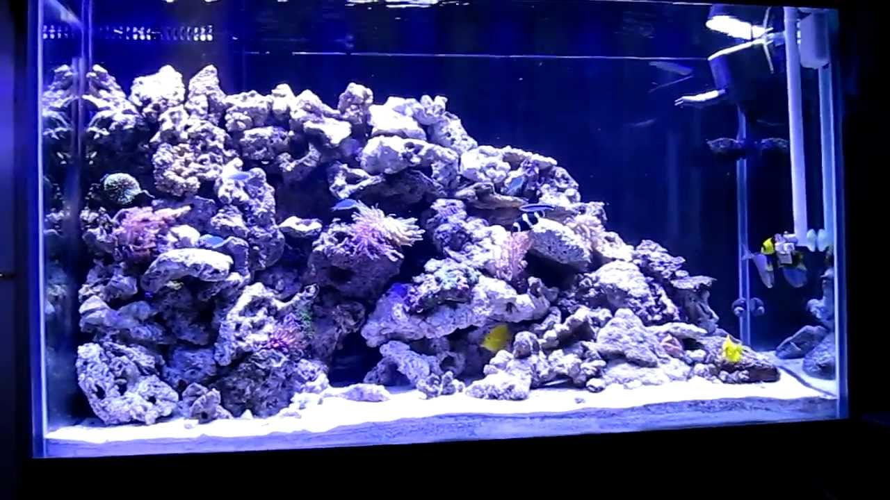 Saltwater fish tank youtube - My 150 Gallon Salt Water Fish Tank