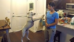 How to Train Your Dog to Stop Jumping
