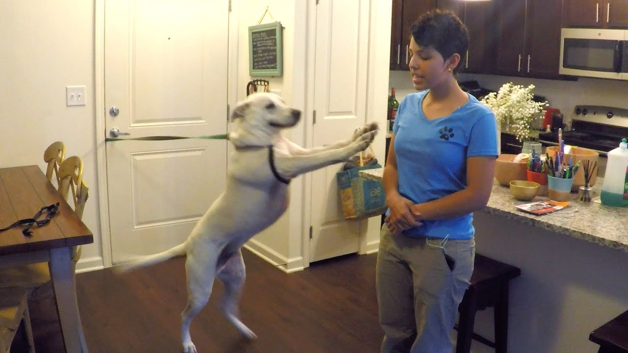 How To Train Your Dog To Stop Jumping Youtube