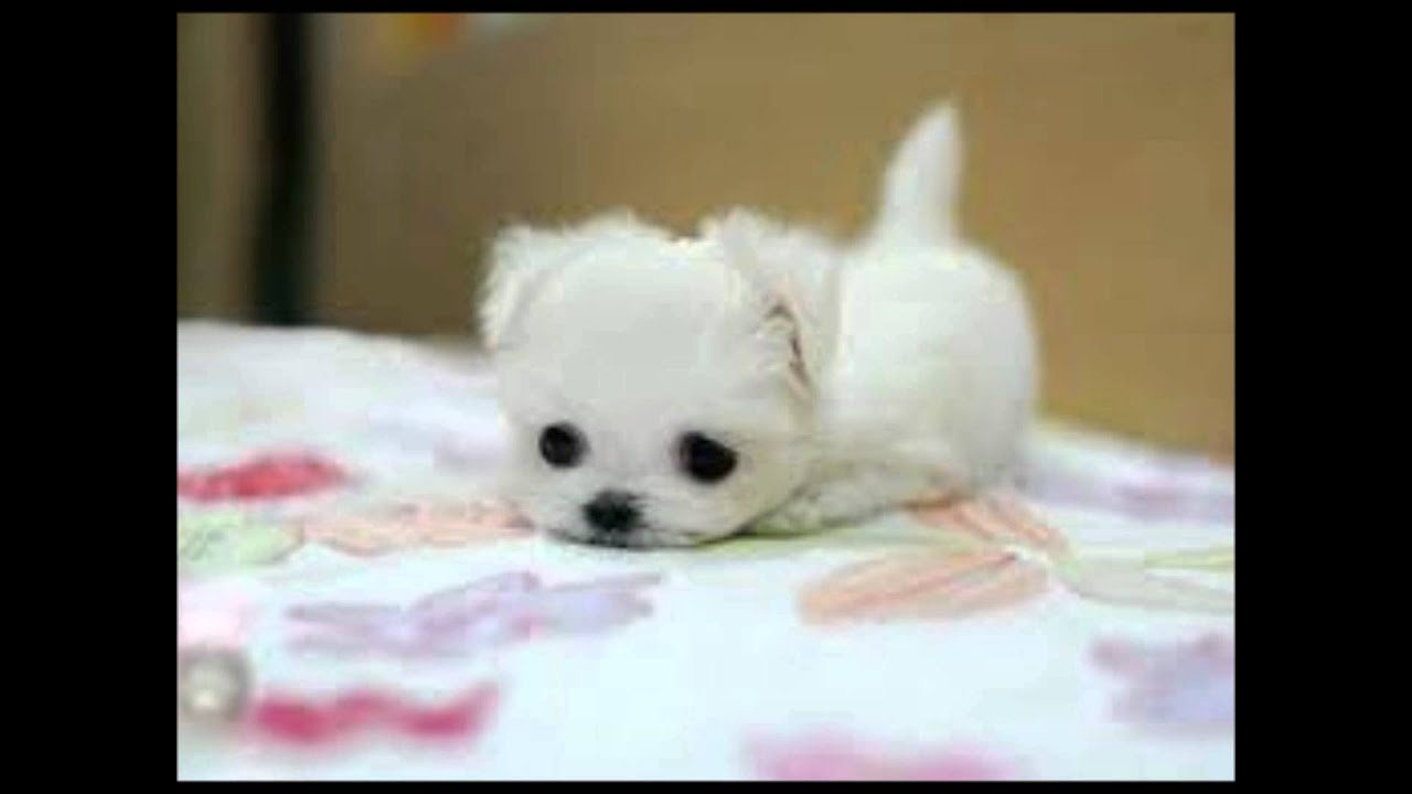 All Kinds Of Puppies Youtube